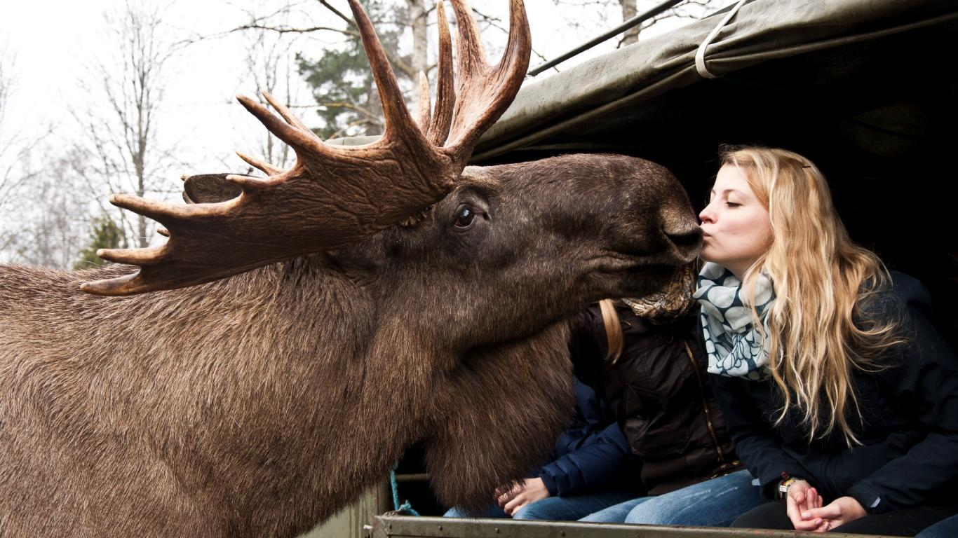 Virum Moose park, near Björkbacken hotel, camping and cottages.